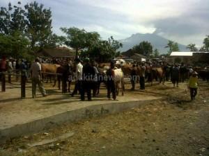 Stok Hewan Siap Kurban di Kabupaten Kediri Surplus