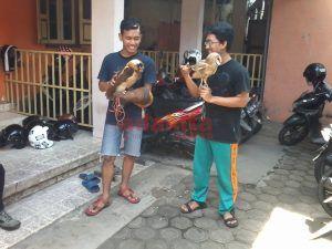 Pelihara Dari Kecil, Bisa Dilepas Untuk Usir Tikus