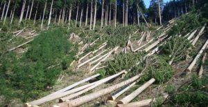 Kerugian Akibat Perambahan Hutan Tahun 2016 Capai Rp 12 M