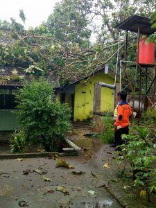 Hujan Lebat dan Angin Kencang, 2 Ruang SD Tertimpa Pohon