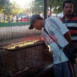 Ditangkap Warga, Ular Piton Sepanjang 4 Meter Bisa Barter dengan Cat Musala