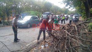 Pohon Tumbang, Dua Pengendara Motor Terluka
