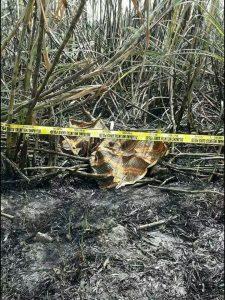 Tewas Terbakar di Lahan Tebu