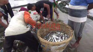 Nelayan Pantai Sidem Keluhkan Keberadaan Karamba Benur Lobster