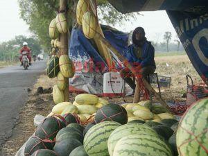 Pasar Buah Dadakan Setiap Panen Raya di Kecamatan Megaluh
