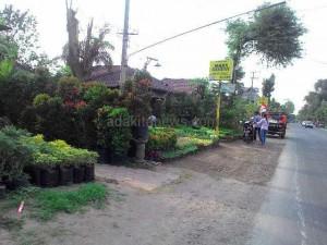 Jalan Raya Teratai Ngadiluwih, Pasar Tanaman Hias Nasional