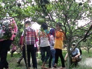 Wisata Kebun Jeruk Balonggebang jadi Alternatif saat Berlibur