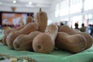 Labu Madu, Idola Baru Hortikultura di Kediri