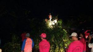 Beringin Tumbang Tuntas Dievakuasi, BPBD Fokus Salurkan Bantuan